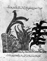0122166 © Granger - Historical Picture ArchiveKALILA WA DIMNA.   The story of the Ravens and the Owls, from the Arab version of the traditional Sanskrit collection of fables, Kalila wa Dimna, by 'abd Allah ibn al-Moqaffa, 1220-1230.
