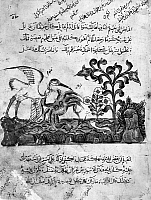 0122168 © Granger - Historical Picture ArchiveKALILA WA DIMNA.   A heron trying to carry a crab to safer ground, from the story of the Lion and the Bull, from the Arab version of the traditional Sanskrit collection of fables, Kalila wa Dimna, by 'abd Allah ibn al-Moqaffa, 1220-1230.