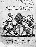 0122180 © Granger - Historical Picture ArchiveKALILA WA DIMNA.   The two jackal protagonists, Kalila and Dimna, from the story of the Lion and the Bull, from the Arab version of the traditional Sanskrit collection of fables, Kalila wa Dimna, by 'abd Allah ibn al-Moqaffa, 1220-1230.