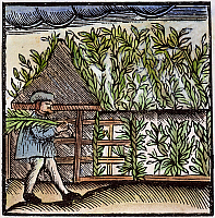 0066734 © Granger - Historical Picture ArchiveJEWISH HOLIDAY, 1663.   Building the bower for Sukkot, the Jewish Harvest Festival. Woodcut from Johann Leusden's 'Philologus Hebraeo-mixtus...', Utrecht, 1663.