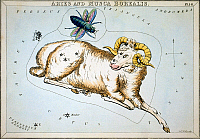 0120432 © Granger - Historical Picture ArchiveCONSTELLATION: ARIES.   Figuration of the constellations Aries (ram) and Musca Borealis (northern fly). Line engraving by Sidney Hall from 'Urania's Mirror,' London, 1825.