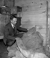 0171977 © Granger - Historical Picture ArchiveMETEORITE, 1939.   E.P. Henderson of the Smithsonian Institution inspects a 2,000 pound fragment of a shooting star discovered in 1903 near Melbourne, Australia. Photograph, 1939.