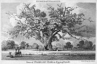 0045130 © Granger - Historical Picture ArchiveTHE FAIRLOP OAK.   The Fairlop Oak in Epping Forest, England. Etching and engraving, English, 1802.