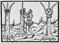 0091031 © Granger - Historical Picture ArchiveBOTANY: GRAFTING, 1575.   Tree grafting. Woodcut from a book by Leonard Mascall on the art of planting and grafting trees, London, 1575.