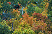0163142 © Granger - Historical Picture ArchiveMINNESOTA: FOLIAGE.   Aerial view of autumn foliage in a Minnesota forest. Photographed c1974.