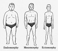 0264442 © Granger - Historical Picture ArchiveSHELDON: BODY TYPES.   An illustration of the three basic body types, or 'somatotypes,' believed to be related to differences in human temperament according to American psychologist William Herbert Sheldon, whose theories became popular in the 1940s and '50s. Left to right: Endomorphic, mesomorphic, and ectomorphic.