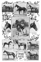 0370213 © Granger - Historical Picture ArchivePACER RACEHORSES, 1902.   Notable pacer racehorses. Photographs and illustrations, 1902.