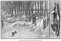 0096263 © Granger - Historical Picture ArchiveLONG ISLAND: RABBIT HUNT.   Rabbit shooting in Long Island. Engraving after a drawing by Gaston Fay, 1883.
