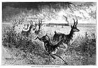0264524 © Granger - Historical Picture ArchiveCOLORADO: HUNTING, 1875.   'Shooting Antelopes from a Railroad Train in Colorado.' Engraving, American, 1875.