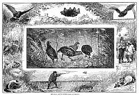0264900 © Granger - Historical Picture ArchiveQUAIL HUNTING, 1880.   'The Quail and Its Enemies.' Quail encountering traps and predators. Engraving, American, 1880.