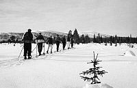 0097942 © Granger - Historical Picture ArchiveCROSS-COUNTRY SKIING.   Skiers in Finland, c1960.