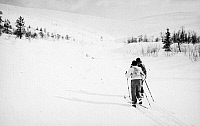 0097943 © Granger - Historical Picture ArchiveCROSS-COUNTRY SKIING.   Skiers in Finland. Photographed c1960.