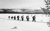 0097945 © Granger - Historical Picture ArchiveFINLAND: SKIING, c1960.   Cross-country skiing, c1960.