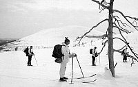 0097948 © Granger - Historical Picture ArchiveFINLAND: SKIING, c1960.   Cross-country skiing in Finland. Photographed c1960.