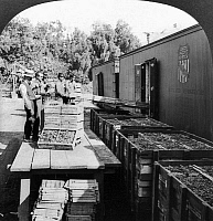 0116579 © Granger - Historical Picture ArchiveREFRIGERATOR CAR.   Men loading crates of grapes onto refrigerated railroad cars to transport from Gusati, California to the East Coast. Stereograph by Philip Brigandi, 1923.