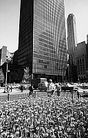 0186597 © Granger - Historical Picture ArchiveNEW YORK CITY, c1965.   Tulips along Park Avenue in New York City; the Seagram Building and the General Electric Building in the background. Photograph, c1965.