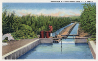 0324170 © Granger - Historical Picture ArchiveHAWAII: SUGAR CANE FIELD.   An irrigation ditch in a sugar cane field in Hawaii. Postcard, American, 1935.
