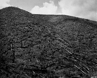 0172860 © Granger - Historical Picture ArchiveIDAHO: COEUR D'ALENE, 1950.   A hillside in Coeur d'Alene, Idaho, which burned in a forest fire in 1931; members of the Civilian Conservation Crops felled the trees and planted new plants in 1939-40. Photograph, June 1950.