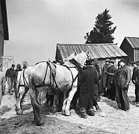 0078415 © Granger - Historical Picture ArchiveINDIANA: FARM SALE, 1937.   Auctioning off a team of horses at the closing-out sale of Frank Sheroan, tenant farmer, near Montmorenci, Indiana. Photographed by Russell Lee in February 1937.