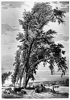 0184083 © Granger - Historical Picture ArchiveIOWA: COUNCIL BLUFFS, 1855.   A group of cottonwood trees beside the ferry landing at Council Bluffs, Iowa, on the Mormon Trail. Steel engraving, English, 1855, by Charles Fenn, after a sketch by Frederick Hawkins Piercy.
