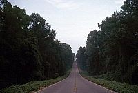 0163005 © Granger - Historical Picture ArchiveMISSISSIPPI: ROAD.   Road lined with kudzu vines near Vicksburg, Mississippi. Photographed c1974.
