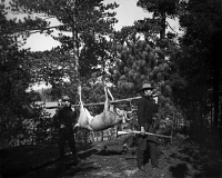 0621810 © Granger - Historical Picture ArchiveADIRONDACKS: HUNTING, c1903.   Hunters carrying a deer carcass in the Adirondacks, New York. Photograph, c1903.