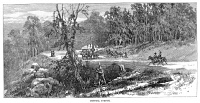 0355132 © Granger - Historical Picture ArchiveTENNESSEE: RUGBY, 1880.   The clearing of Central Avenue in the newly founded town of Rugby, Tennessee, 1880. Contemporary American wood engraving.