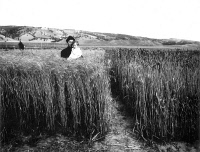 0039957 © Granger - Historical Picture ArchiveMOTHER AND CHILD, c1908.   A mother and child standing in a wheatfield near Newscastle, Wyoming, c1908.