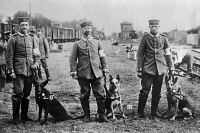 0353587 © Granger - Historical Picture ArchiveWWI: RED CROSS, c1914.   German Red Cross medics and dogs. Photograph, c1914.