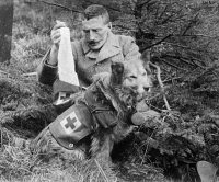 0370868 © Granger - Historical Picture ArchiveWWI: RED CROSS DOGS, c1915.   A man getting bandages from the pack of a Red Cross dog during World War I. Photograph, c1915.