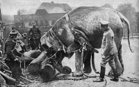 0382861 © Granger - Historical Picture ArchiveWORLD WAR I: ELEPHANT, 1915.   An elephant used by German soldiers to push heavy logs on a street in occupied Western Europe during World War I. Photograph from Berliner Illustrirte Zeitung, 14 March 1915.