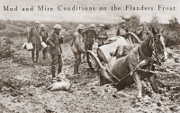 0407871 © Granger - Historical Picture ArchiveWORLD WAR I: FLANDERS.   A horse sunk up to its haunches in mud on a field in Flanders, Belgium, during World War I. Photograph, 1914-1918.