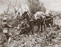 0407872 © Granger - Historical Picture ArchiveWORLD WAR I: FLANDERS.   British troops pushing and pulling a mule team through a muddy field in Flanders, Belgium, during World War I. Photograph, 1914-1918.