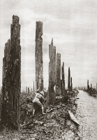 0407961 © Granger - Historical Picture ArchiveWORLD WAR I: DESTRUCTION.   An Allied soldier amid a destroyed tree-lined street during World War I. Photograph, c1916.
