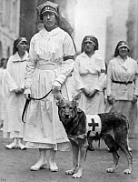 0528476 © Granger - Historical Picture ArchiveRED CROSS PARADE, 1920.   A Red Cross nurse with decorated war hero Filax of Lewanno, who rescued 54 Allied soldiers during World War I, on display during the Red Cross parade in New York City. Photograph, 4 October 1920.