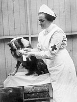 0528477 © Granger - Historical Picture ArchiveWWI: WAR DOG, 1917.   A Red Cross nurse bandaging the wounded foot of a collie. Photograph, 1917.