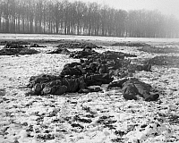 0018071 © Granger - Historical Picture ArchiveWORLD WAR II: BELGIUM, 1944.   German soldiers lie dead after attempting to storm the 101st Airborne command post in Bastogne, Belgium, on 25 December 1944.