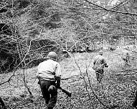 0099826 © Granger - Historical Picture ArchiveWORLD WAR II: BELGIUM.   A division patrol of the U.S. First Army searches the woods in Belgium for German paratroopers. Photographed December 1944.