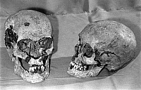 0350290 © Granger - Historical Picture ArchiveROMANOVS: REMAINS, 1993.   Supposed skulls of Emperor Nicholas II of Russia and Empress Alexandra Feodorovna of Russia found on the site of a secret burial in Yekaterinburg, Russia, 1993. Full credit: ITAR-TASS Photo Agency / Granger, NYC -- All Rights Reserved.
