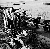 0114170 © Granger - Historical Picture ArchiveAFRICA: NIGER RIVER, 1967.   A young woman buying fish from a fisherman to sell at the local market, on the Niger River near Mopti, Mali, 1967.