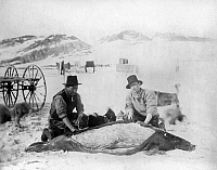 0113497 © Granger - Historical Picture ArchiveARCTIC: EXPEDITION, c1881.   Lady Franklin Bay Expedition members Dr. Octave Pavy and Jens skinning a seal in the Arctic region of Lady Frankin Bay, Canada. Photograph, c1881-1884.