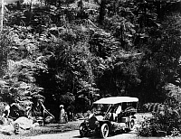 0123853 © Granger - Historical Picture ArchiveAUSTRALIA: FOREST, c1910.   'On the Tumut to Bega route,' New South Wales, Australia, c1910.