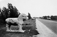 0120290 © Granger - Historical Picture ArchiveCHINA: MING TOMBS.   A standing lion statue on the Spirit Way at the Ming Tombs, north of Peking (Beijing), China. Photograph, early 20th century.