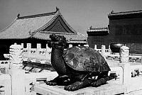 0121690 © Granger - Historical Picture ArchivePEKING: TURTLE DRAGON.   Bronze sculpture of a turtle with a dragon's head on the grounds of the imperial palace in the Forbidden City, Peking, China. Photographed c1970.