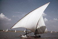 0131645 © Granger - Historical Picture ArchiveEGYPT: FELUCCAS ON THE NILE.   Photographed by Eliot Elisofon, c1965.