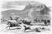 0078051 © Granger - Historical Picture ArchiveGAUCHOS, 1856.   Gauchos chasing wild horses on the Falkland Islands. Line engraving, 1856.