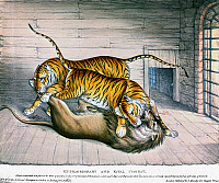0116429 © Granger - Historical Picture ArchiveTOWER OF LONDON: MENAGERIE.   'Extraordinary and Fatal Combat' between tigers and a lion at the Royal Menagerie at the Tower of London, 3 December 1830. Contemporary English lithograph.