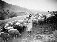 0131032 © Granger - Historical Picture ArchiveJORDAN VALLEY: SHEPHERD.   A young shepherd plays a flute to his flock. Photograph, c1928.