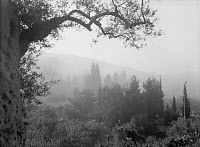 0132698 © Granger - Historical Picture ArchiveGARDEN OF GETHSEMANE.   The Garden of Gethsemane in Jerusalem covered in fog. Photograph, c1936.