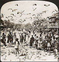 0323155 © Granger - Historical Picture ArchiveINDIA: JAIPUR, c1907.   'Myriads of birds and throngs of natives - a street scene, Jaipur, India.' Stereograph, c1907.